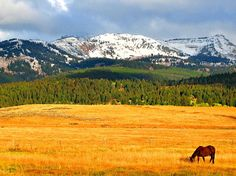 Yellowstone National Park, Montana. Went to Yellowstone years ago but I remember it being gorgeous!!