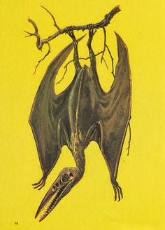 Pterosaur depicted roosting upside-down like a bat.   Vintage Dinosaur Art: The Mysterious World of Dinosaurs - Part 2