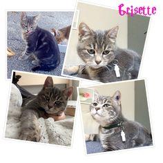 Grisette'