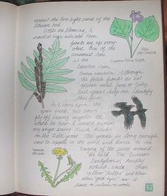 Page 7-Nature Journal