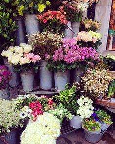 B l o o m s holy peonies at los angeles flower district at los angeles flower district flower power pinterest mightylinksfo