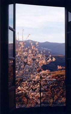 Almendros en flor desde la Alquería de Morayma. (Cádiar)