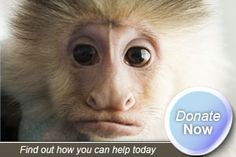 A non-profit that raises/trains capuchin monkeys to provide in-home assistance to people living with mobility impairments. Capuchin Monkeys, Helping Hands, Non Profit, Trains, Therapy, Animal, People, Fashion, Moda