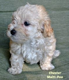 Good Names for Boy Puppies can be found at http://smalldogplace.com/boy-puppy-names.html