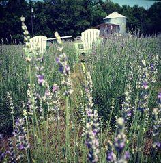 Savannah's Meadow my wedding venue!!
