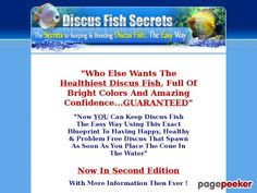 """Discus Fish Secrets - 75% Commission - http://positivelifemagazine.com/discus-fish-secrets-75-commission/ http://pagepeeker.com/t/l/www.discusfishsecrets.co%2f  Discus Fish Secrets – 75% Commission     ***Get your free domain and free site builder***  Interested? Click here to learn more!    Please follow and like us:  var addthis_config =   url: """""""",  title: """""""""""
