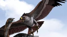 The extinct New Zealand giant eagle, Haast's Eagle (Hapagornis Moorei), was the largest bird of prey in the world. Extinct Birds, Extinct Animals, Prehistoric World, Prehistoric Creatures, Prehistoric Wildlife, Wildlife Art, Mythical Creatures, Largest Bird Of Prey, Giant Eagle