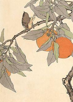Imao Keinen (1846-1924). Bitter Orange, One World Warbler. #woodblock #bird #kacho-e