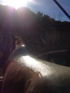 Revitalisation du corps du cheval. Élimination des toxines Shiatsu, Horses, Animals, Health Club, Horse, Animales, Animaux, Animal, Animais