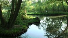 Listen to the birds on a spring morning in the Spreewald Biosphere Reserve between Leipe and Lehde.
