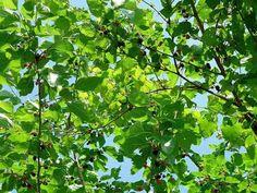 Berries | 20 Survival Gardening Plants For Spring