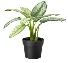 Ikea Artificial Potted Plant, Dumb Cane, 9 Inch