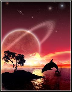 dolphin at sunset image picture and wallpaper