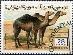 1996: Dromedary (Camelus dromedarius) (סינדרלות) (Sahara Occ.) Col:EH 1996082
