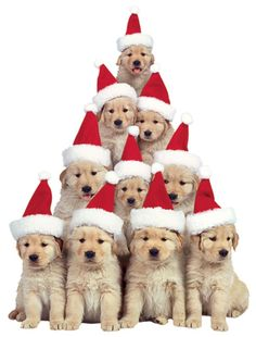 Golden puppy Xmas tree