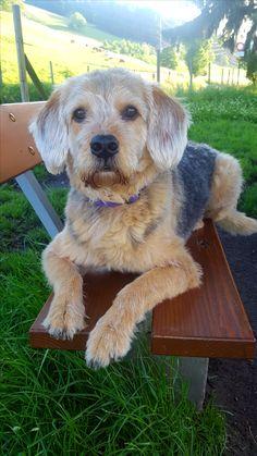 Hunde Foto: Jasmine und Malik - Treuer Freund☺ Hier Dein Bild hochladen: http://ichliebehunde.com/hund-des-tages  #hund #hunde #hundebild #hundebilder #dog #dogs #dogfun  #dogpic #dogpictures