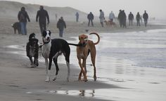 Greyhound Beach walk