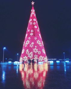 Funchal has more than one Christmas tree but this one is definitely the biggest. #Madeira #portugal