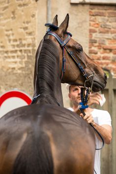 Siena, Italy - A horse is prepared for the extravagant parade that precedes the running of Siena's Il Palio horse race in July 2013.