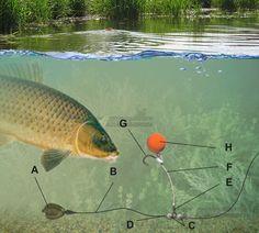 Montura pentru pescuit la crap in ape cu aluviuni CHOD RIG | Ghidul Pescarului