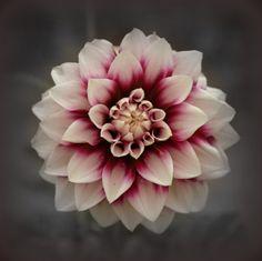 Pretty by Annemieke Prozee on 500px