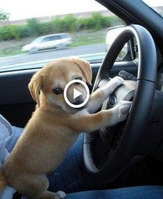 Cute is Not Enough - Funny Cats and Dogs Compilation Funny Cat Compilation, Videos Funny, Dog Videos, Humor Videos, Cute Baby Animals, Funny Animals, Wild Animals, Funny Dogs, Funny Humor
