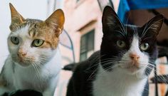 Cats in Italy    http://voli-low-costs.it/