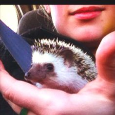Heading home for the first time. #hedgehogs #pets # love