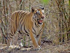 Bagdara Wildlife Sanctuary - in Sindh, Madhya Pradesh, India