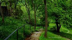 Dumbarton Oaks Garden Georgetown Washington DC staircase path woods photography