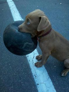 "~ ""Well gee Mom, I'm really sorry for being in the street, but look I found my ball."" ~"