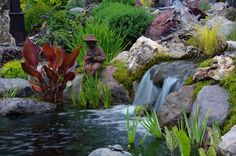Best Water Plant Feature People's Choice Winner: Mark Kulak, Sorrento, BC Votes) How are your ponds doing? Are your fish still hiding below or has the warm temps awoken them?