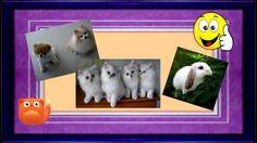 Смешные Кошки, Котята и Дети