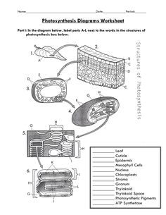 Photosynthesis NGSS Scaffolded Worksheet Photosynthesis