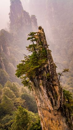 #Zhangjiajie National Forest Park, #China                                                                                                                                                                                 More