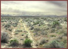wagon ruts along the oregon trail photo source here i knew that the ...