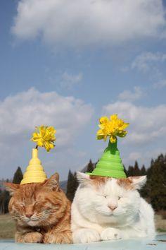 のせ猫 水仙の花 |のせ猫オフィシャルブログ Powered by Ameba