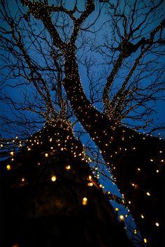 Small tree aesthetic New Ideas Aesthetic Iphone Wallpaper, Screen Wallpaper, Aesthetic Wallpapers, Phone Backgrounds, Wallpaper Backgrounds, Pretty Lights, Jolie Photo, Tree Lighting, Christmas Aesthetic