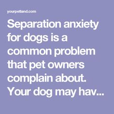 Separation anxiety for dogs is a common problem that pet owners complain about. Your dog may have separation anxiety if he/she becomes destructive when left alone for long periods of time.