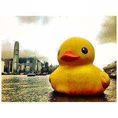 .@alvin_ynwa | #hongkong #rubberduck #FlorentijnHofman | Webstagram - the best Instagram viewer