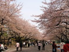Beroemdste park van Tokio