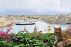 cat-malta-harbour