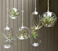 Hanging Glass Bubble Collection brings the terrarium inside