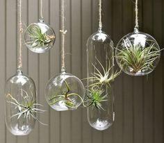 plantes suspendues dans des sphères en verre