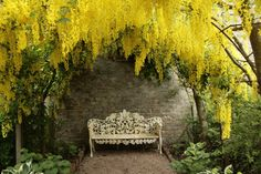 I would love to have this honey colored Laburnum flower incorporated into my wedding!