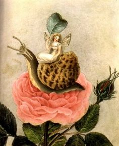 Fairy riding a snail, Illustration by Amelia Jane Murray.