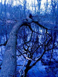 Fallen tree I.