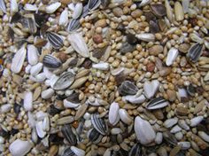 PARAKEET MIXTURE:A super clean mixture fromWitte Molen containing Millet seeds, Canary seed, Saflower, Buckwheat, Wheat, Striped sunflower, Peeled oats, White Sunflower, Pointed oats, Paddy Rice, Red dari, and Hempseeds. http://shop.robharvey.com/parakeet-mix-454-c.asp