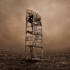 """Lost"" - elephant on wooden ladder - surreal #Photoshop scene [ via @pourmecoffee ]"