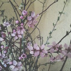#spring #flower #flowers #pink #beautiful #nature #love #magic #april  